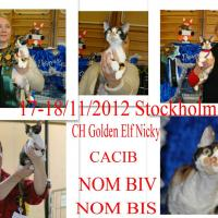 Golden Elf Nicky of Elfe Feerique - 19.03.2013 - 16:37