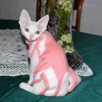 Jacqueline - 10/27/2010 - 02:04